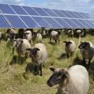 <h1>Der Solarpark Ziegelscheune<br/></h1>